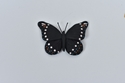 Picture of Hinderland  Butterfly Pin